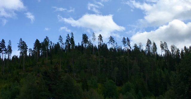 Bergeberget i Elverum