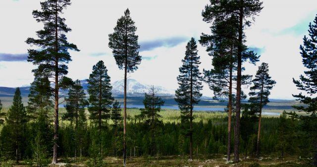Utsikt i Engerdal