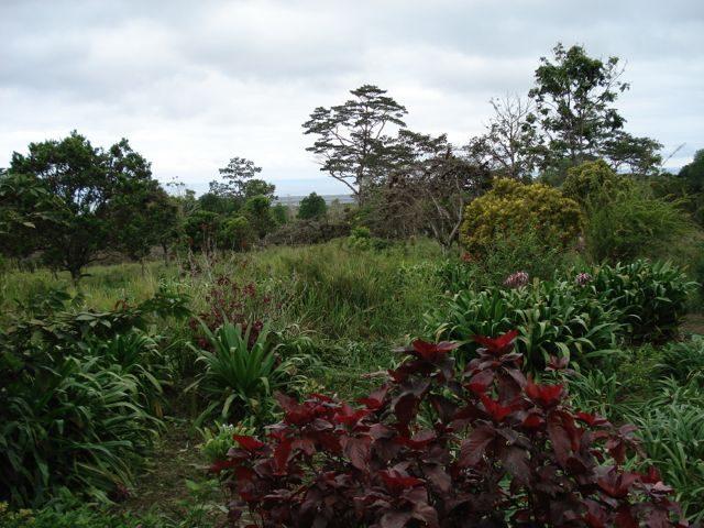 Gården på Bellavista på Galapagos