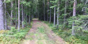 Skog i Flå