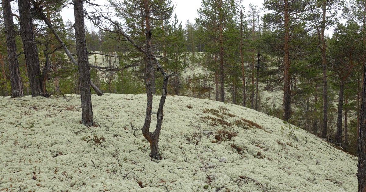 Skog i Folldal