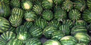 Vannmeloner i Kosovo