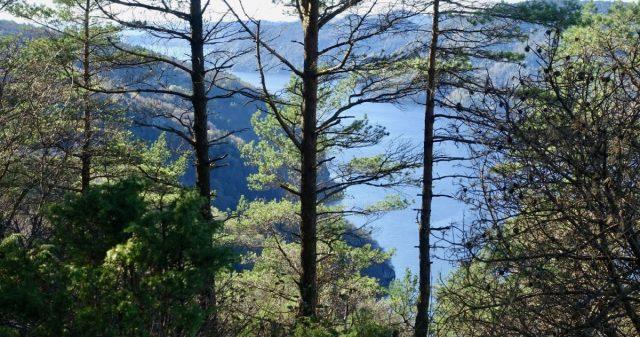 Utsikt mot Fedafjorden