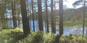 Nissedal skog og vann