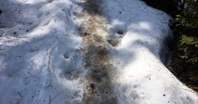 Spor i snøen