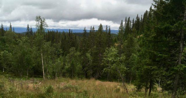 Grenseland i Sør-Aurdal