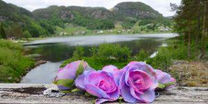 Blomst i Sirdal