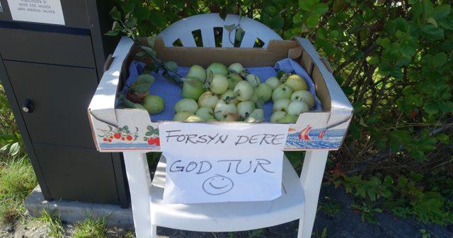 Gratis epler i Stange
