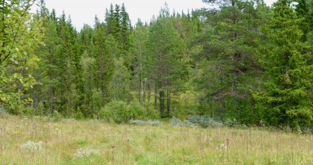 Skog og myr i Vinje