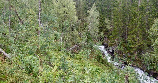Elv og grønn skog i Voss
