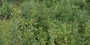 Våt skog i Voss